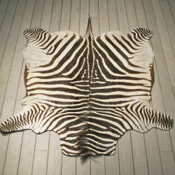 Zebra hides and Rugs
