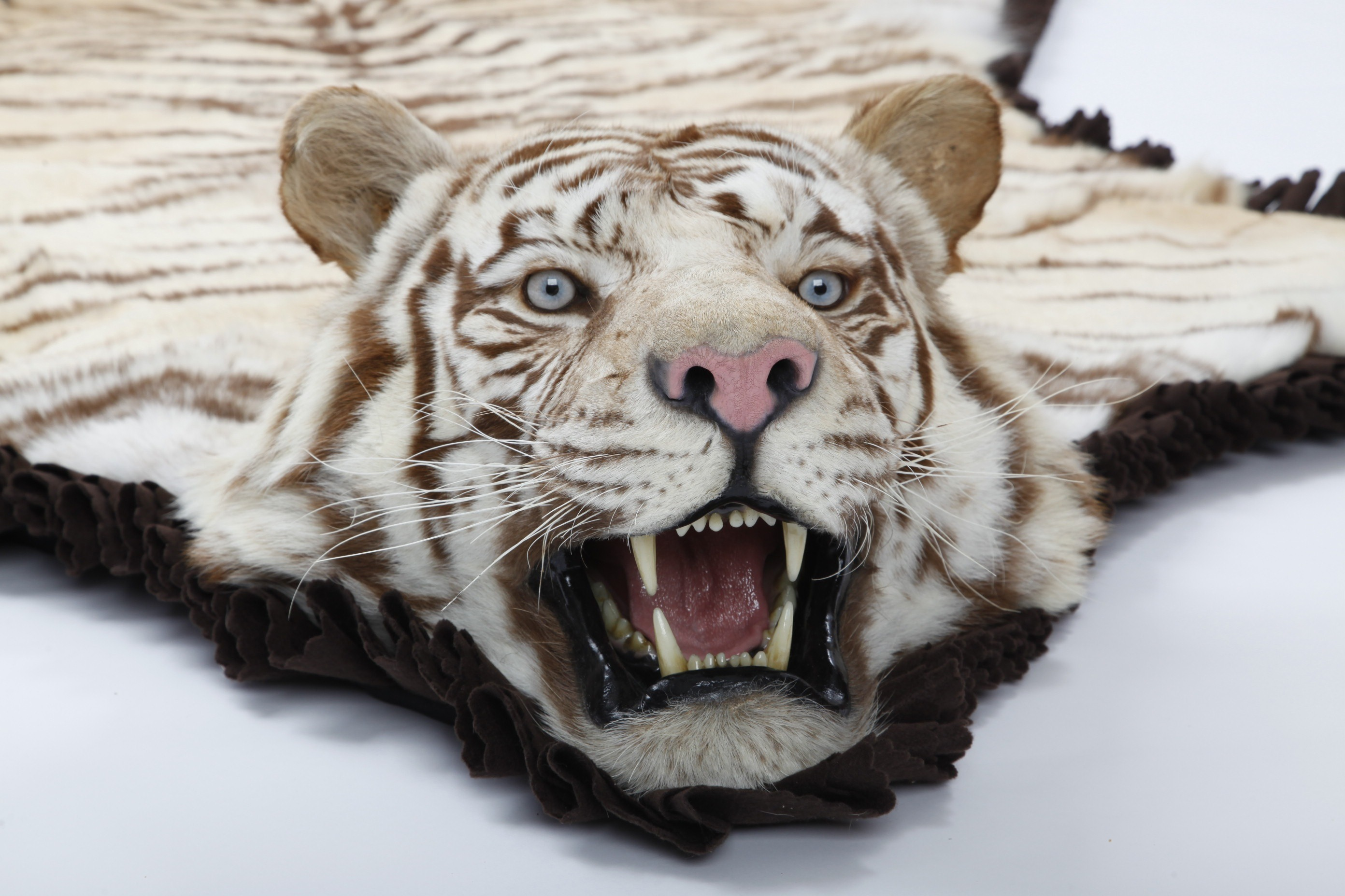 Real White Tiger Skin Rug Home Decor